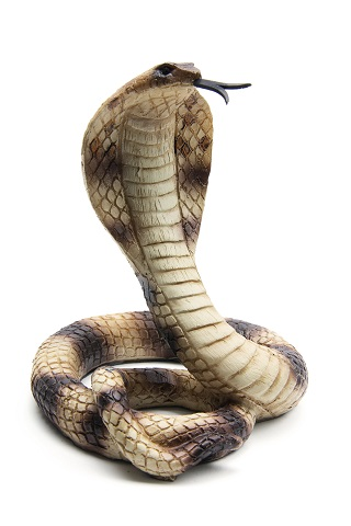 Image Result For Ular King Cobra